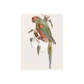 Vanilla Fly - GREETING CARD | GREEN PARROT