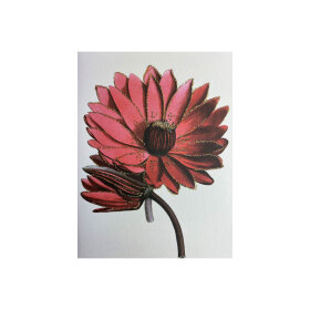 VANILLA FLY - GREETING CARD | RED FLOWER 104